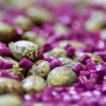 Die Basis für das biobasierte Polyamid wird aus den Bohnen der Rizinuspflanze gewonnen. (Foto: Evonik)