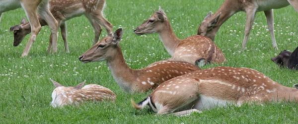 Wildpark Düsseldorf (Foto: Sven Volkens/Wikimedia Commons)