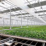 Das Daylight Greenhouse verbraucht nicht nur weniger Energie als ein herkömmliches Treibhaus, sondern gewinnt sie sogar. (Foto: Evonik)