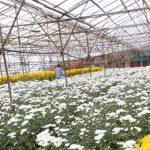 BASF: Lichtschutzmittel für Gewächshausfolien steigert Ernteerträge