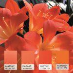 Deifel: Pantone-Trendfarben als Masterbatch