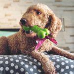 Kraiburg TPE: Elastischer Kauspaß für Hunde