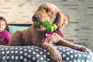 Für ein langlebiges Hundespielzeug verbindet ein maßgeschneidertes TPE Härte und Flexibilität mit Haftung auf Polyamid und guter Einfärbbarkeit. (Foto: Kraiburg TPE)
