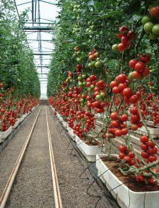Die nächste Generation von Tinuvin NOR soll Landwirten helfen, die Produktivität zu erhöhen, die Pflanzenqualität zu verbessern und die Kunststoffabfälle zu reduzieren. (Foto: Courtesy of Clisol)