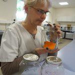 Laborantin Sigrun Bayer ist eine von mehr als zehn Geruchsprüfern beim TITK-Tochterunternehmen OMPG in Rudolstadt. (Foto: TITK)