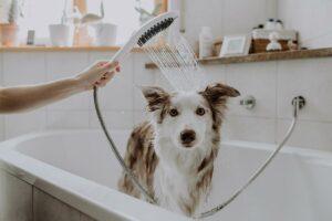 Nur 22 Wochen dauerte die Entwicklung der Hunde-Duschbrause. (Foto: Hansgrohe)